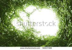a natural green leaf frame