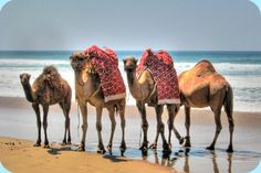 Tangiers.... I rode a camel in Tangiers!