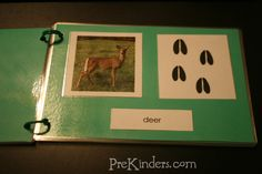 animal tracks booklet ~ blog post from PreKinder.com, but the printable is actually from montessori for everyone