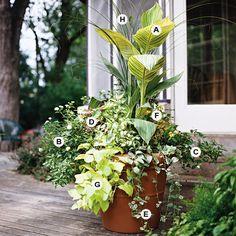 This planting grows best in full sun or partial shade.  A. Canna 'Pretoria' -- 2  B. Lantana 'Lucky White' -- 4  C. Coleus (Solenostemon 'Dappled Dawn') -- 1  D. Coleus (Solenostemon 'Dark Frills') -- 2  E. Vinca major 'Variegata' -- 3  F. Melampodium paludosum -- 1  G. Sweet potato vine (Ipomoea batatas 'Margarita') -- 1  H. Maidengrass (Miscanthus sinensis) -- 1