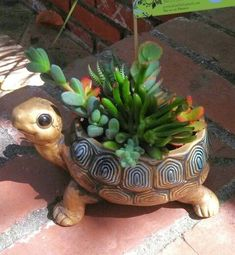 Container Flowers Potted Earth Succulent Arrangements ~ by Robin Mathews Turtle SOLD Succulent Arrangements, Cacti And Succulents, Planting Succulents, Planting Flowers, Cactus Plants, Pot Plante, Succulent Terrarium, Container Flowers, Ceramic Planters