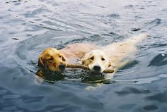 Hankering for the dog days of summer.
