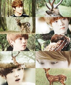 EXO as animals  →  Luhan as a deer