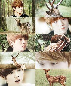EXO as animals→ Luhan as a deer