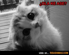 Gatito preguntando,¿Ola ke ase?