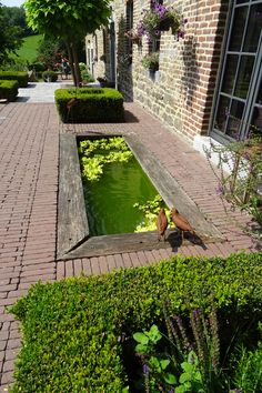 I'd use flat rock on the pond edging. Pond Landscaping, Landscaping Supplies, Water Garden, Lawn And Garden, Plants For Small Gardens, Diy Water Feature, Growing Gardens, Porche, Water Features In The Garden