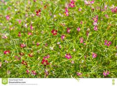 Bildergebnis für Grünblüte