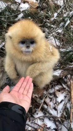 Cute Wild Animals, Cute Little Animals, Cute Funny Animals, Animals Beautiful, Animals And Pets, Cute Cats, Funny Monkeys, Exotic Animals, Super Cute Animals