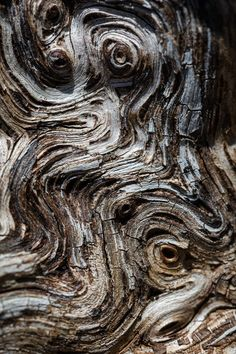 Wood Texture Background, Wooden Textures, Tree Art, Wood Grain, Natural Wood, Photo Editing, Royalty Free Stock Photos, Models, Illustration