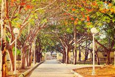 At a park in Mysore, Karnataka. #boutindia #travel #incredibleindia #mysore #karnataka #India #keeptraveling #keepexploring
