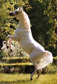 Resultado de imagem para fotos de cavalos de raça