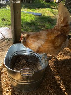 Why you should make a chicken dust bath for your flock