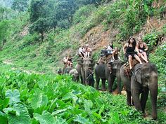 Elephant riding in Chiang Mai, Thailand. So fun.