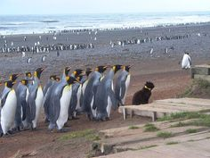 Ultima Thule: Kerguelen, remote but magnificent sub-antarctic islands