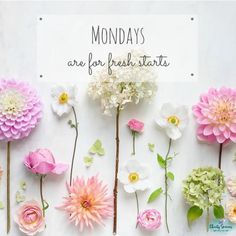 Good Morning Messages, Good Morning Images, Good Morning Quotes, Monday Motivation Quotes, Monday Quotes, Daily Motivation, Monday Greetings, Happy Day Quotes, Monday Again
