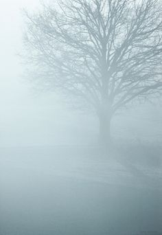 Tree / Winter Silence Art Print