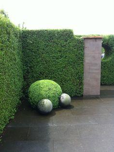 amazing hedge...