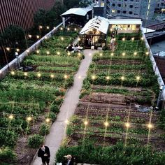 # roof garden # garden landscaping # city garden # urban # roof garden - Sites new Urban Agriculture, Urban Farming, Urban Garden Design, Plantation, Balcony Garden, Garden Cafe, Winter Garden, Vegetable Garden, Fruit Garden