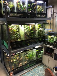 Frog Tank, Tanks, Charts, Aquarium, Goldfish Bowl, Graphics, Aquarius, Fish Tank