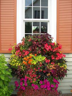 Coleus, geraniums, petunias, calibrachoa   and fuchsia turn this window box into an eye-popping centerpiece.   edmoleo