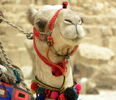 Pretty Camel by The Brit_2, via Flickr