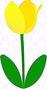 Fiori Gialli Ornamentali.Tulipano In 2020 Tulip Print Videos Tutorial