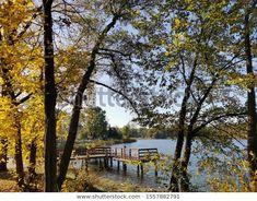 Colors Autumn Promenade Walk Along Lake: zdjęcie stockowe (edytuj teraz) 1557882791 Country Roads, Plants, Autumn, Image, Colors, Fall Season, Fall, Colour, Plant