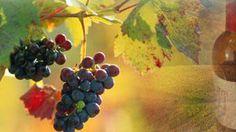 Northern Illinois Wine Trail