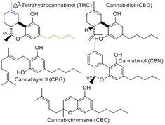 THC Testing