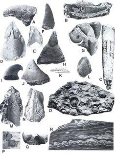 Missouri Fossils - http://www.lakeneosho.org