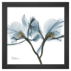 Art.com - Orchids in Blue Framed Print
