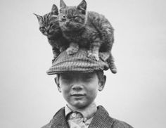 The Cat(s) in the Hat | Community Post: 30 Strange But Delightful Vintage Photos Of Animals