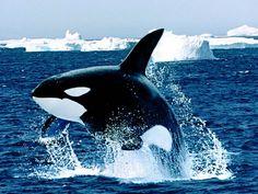 Animais marinhos : Fottus – Fotos engraçadas e fotos legais