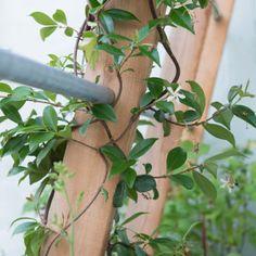 Vis à Vis tuinontwerpers van binnenplaats naar groene oase - Vis à Vis tuinontwerpers Small Patio, Garden Inspiration, Planer, Balcony, Backyard, Flowers, Outdoor, Outdoors, Patio