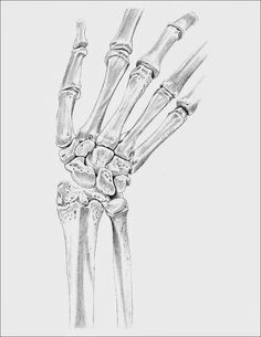 Bones Of The Hand Drawing