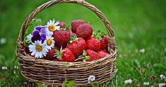Strawberry in Basket Strawberry Pictures, Strawberry Flower, Strawberry Fields, Strawberry Plants, Daisy Wallpaper, Apple Wallpaper, Christian Wallpaper, Rose Tutorial, Red Apple