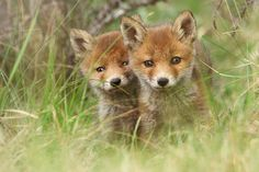 This Photographers Work Will Change the Way You View Wild Foxes | Blaze Press