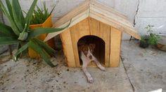 como hacer una cucha para perros de madera