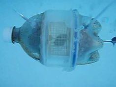 Hamster Powered Submarine