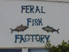 feral fish factory