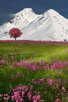 Swiss Alps, Brunnen, Switzerland