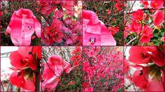 Ανοιξιάτικος κήπος και πλεκτή  παιδική ζακέτα.  http://magdax.blogspot.gr/2014/03/blog-post.html