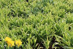 Boden Grass Photoshop, Grass, Herbs, Plants, Boden, Grasses, Herb, Plant, Planets
