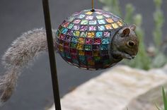 Squirrels can be a pain, but they're also pretty darn cute, too. Check out these 13 photos of squirrels and their most hilarious hijinks.