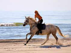 Ensenada horseback riding Excursion Prices
