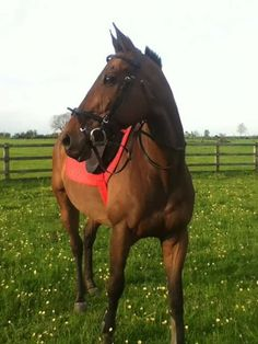 Probably one of my most favourite horses ever was my ex racehorse cheerio