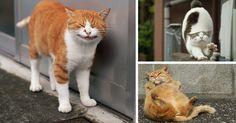 Japanese Photographer Documents The Many Faces of Tokyo's Stray Cats (Masayuki Oki) - 9GAG
