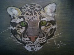 'Sirius' coloured pencil drawing of a clouded leopard
