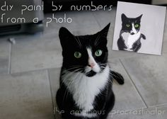 paint by number of a photo, using Picnik or Photoshop to simplify your photo to paint onto canvas