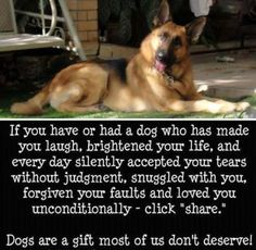 If you have or had a dog who has made you laugh, brightened your life and every day silently accepted your tears without judgment, snuggled with you, forgiven your faults and loved you unconditionally -share. Dogs are a gift most of us don't deserve